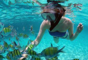 cozumel snorkeling from playa del carmen 300x205 - Египет