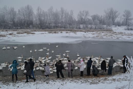 15420291305be97f4a5e250 - Новогодние Черновцы, Камянец и не только