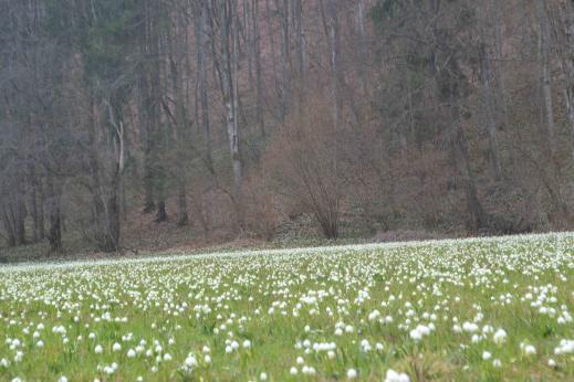 15198133345a9682d657f4c - Закарпатское ассорти + долина белоцвета