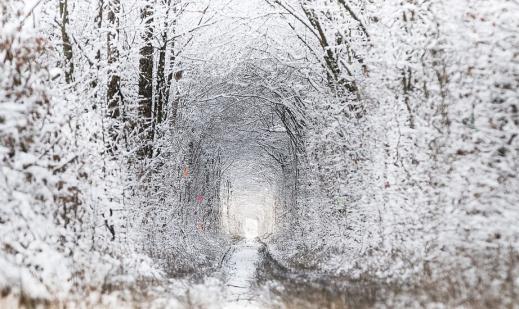 15447862935c139175dfa05 - Тараканов, Дубно + Тоннель любви (Зимний вариант)