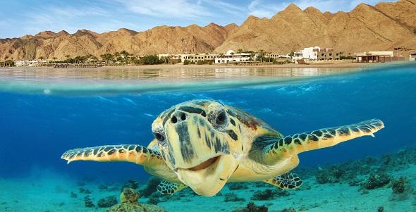 Egypt_Vacation-Spotlight