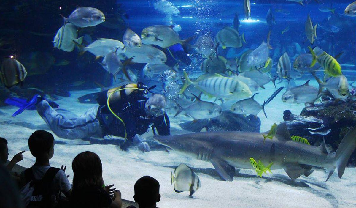 okeanarium - Уикенд по-европейски