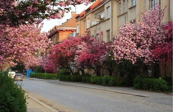"""148949033958c7d1a36b3a1 - Релакс-тур """"Термальне Закарпаття"""" + цвітіння сакури"""