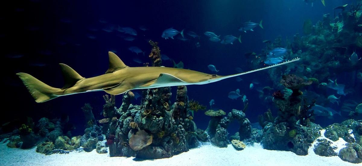 aquarium header 1582671600 - HOLA! БАРСЕЛОНА