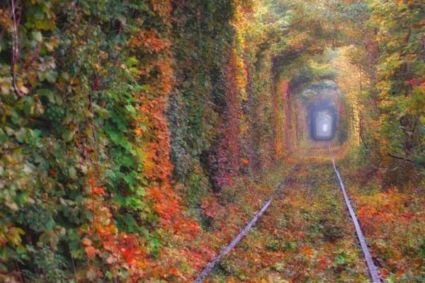 1443549742560ad22e1184e - Берестечко - Дубно - туннель любви