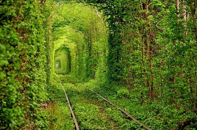 6861 800x600 Tonnely lyubvi v Rovno - Перлини Волині + тунель кохання